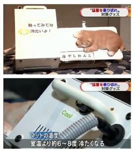 NHK TV wanko